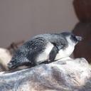 えながの空飛ぶペンギン日記