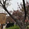1月24日・金曜日~1月27日・月曜日 【うんちくま29:造幣局の桜18】