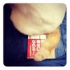私の猫は何故、私の本を尻蹴にするのか