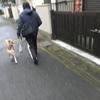 柴犬がビーグルに噛まれた昨日の話