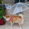 雨の日に友達はいらない!傘を探そう