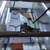 トウブドロガメ、'18子亀の成長10。