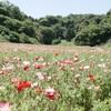 【くりはま花の国】大人は季節の花、子供はアスレチックを楽しめます