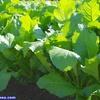 便秘のセルフケア|排便力をつけるのに有効な食材とその効果|強い植物性乳酸菌