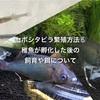 セボシタビラ繁殖方法⑥タナゴの稚魚が孵化した後の飼育や餌について
