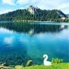 【スロベニア②】白鳥と湖とお城と。おとぎ話みたいなブレッド湖に自力で行ってみた。