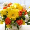 DAILY FLOWERS !!