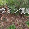 4月15日 定植と種まき