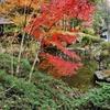 幕山公園の池(神奈川県湯河原)