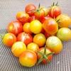 ミニトマト栽培でトマトの実が割れる現象について原因と対策