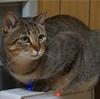 空気清浄機の上の猫