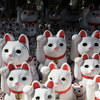 招き猫のお寺「豪徳寺」と越生梅林