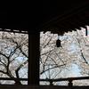 琵琶湖疎水と三井寺の桜