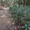 寒露に入る工石山遊山 共生林