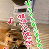 珈琲と犬と焙煎