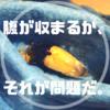 パプキン♀の羽化について【パプキンブリード2019-腹が収まるか、それが問題だ】