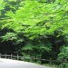 箕面の滝と新緑観光…過去20160515