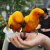 鳥が苦手でも楽しめた!花と鳥とのふれあいテーマパーク「掛川花鳥園」