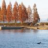 秋のバス釣り-フォーリングパターン-縦の釣り