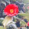 お花とカレーと言の葉と