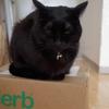 今日の黒猫モモ&白黒猫ナナの動画ー995