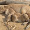 FUJIFILM X-T10で秋の動物園を撮る