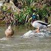 日本 2月15日自宅周辺の野鳥たち