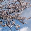 手賀沼遊歩道でよく見られる花と鳥