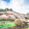リーフでお出かけ!秋にお花見? 小原四季桜【東海ドライブ】