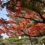 成田山公園紅葉祭り November 2017