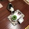 【モグニャン 食い付き,感想 続報】【四猫 多頭飼い】