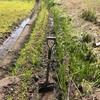 田んぼの四隅は土が溜まる