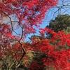 今週末が見頃!東京のオススメ紅葉スポット【国立科学博物館附属自然教育園】