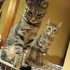 【猫の嫉妬】エリンギのじっとりした視線