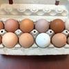 生みたて卵をいつも頂き、味の差の研究?? ターキーの卵を初めて食べました。
