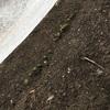 簡易温室の発芽確認⭐️ やったー⭐️