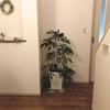 観葉植物が我が家に!掃除しやすい工夫をしました♪