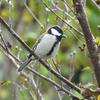 野鳥観察初心者はまず公園に行くべし!公園で出会える魅力的な野鳥たち