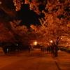 花見ランその2:大阪城公園夜桜ラン