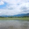 南足柄市千津島 ハナアオイ農道の風景