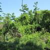 新緑の島墾隊