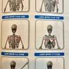 身体の使い方シリーズその21肩甲骨の位置正しいですか⁈空手家 クライマー スポーツ選手 一般の方々にもオススメです‼︎身体のスタビライザー肩甲骨を整えるには⁈