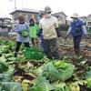 <農業講座日記> 収穫風景を撮影 写真入りはがき用に(11月26日)