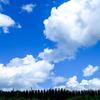 奈良県平群町は夏秋期の生産量が日本一という小菊の大産地。身近な地元の広域農道を調べてみよう