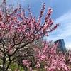 4月第1週/第2週から公開(大阪市内)の映画で気になるのは