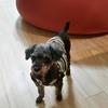 犬を飼うのに必要な物とは?保護犬の里親になって揃えたアイテムのおすすめリスト