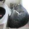 炊飯器よりは小さいおネコさま。