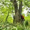 超本気出してきた!森を輝かせるためのササ刈!