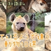 【動物プチ知識#4】ハイエナはイヌじゃない!似ているようで違う動物10選