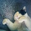 スコータイの遺跡の近くで丸まって寝る猫